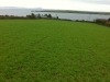 Our barley crop for fattening our winter stock
